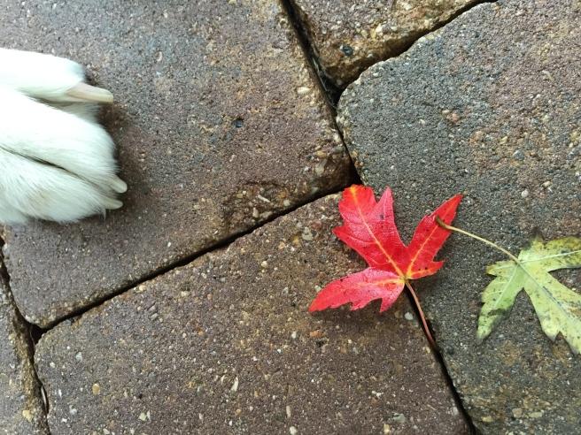 foot leaf